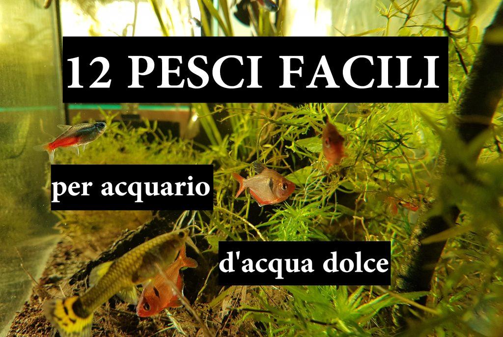 12 pesci facili per acquario d'acqua dolce