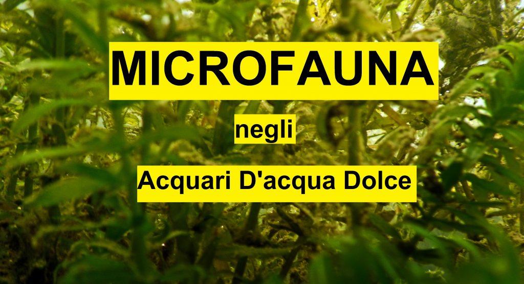 Microfauna negli acquari d'acqua dolce