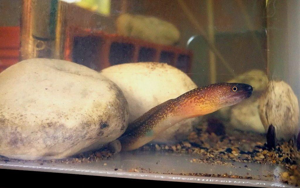 pesci facili acquario marino