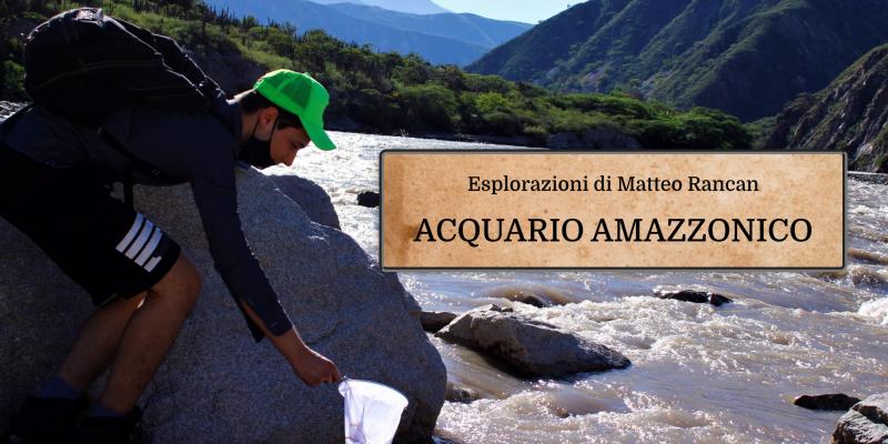 banner acquario amazzonico